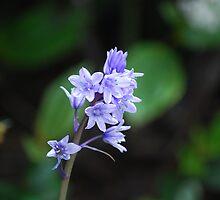Blue Flower by Jake Eisner