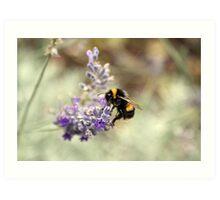 Buzz, Buzz, Buzz Art Print