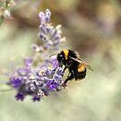 Buzz, Buzz, Buzz by Mike Topley