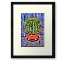 HDR Cacti Framed Print