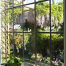 WISTERIA..Through my window !!!! by katymckay