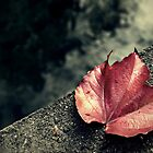 Autumn leaf on the bridge by were