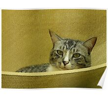 Cat in a hammock Poster