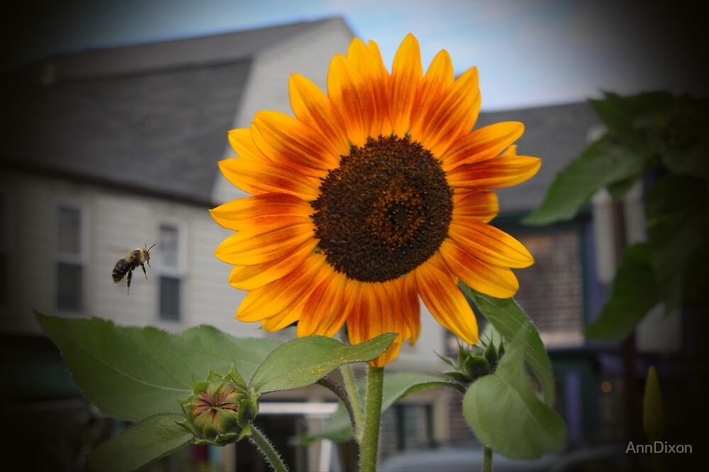 SUNFLOWER & Bee by AnnDixon