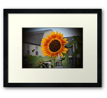 SUNFLOWER & Bee Framed Print