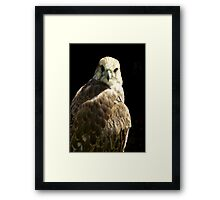 Bird of Prey #1 Framed Print