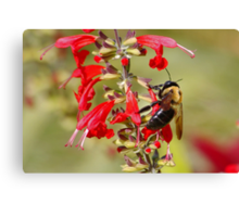 Bee in its Elements Canvas Print