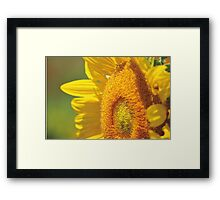 Sunny Days in the Country Framed Print