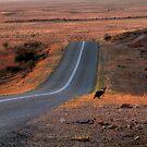 Outback Hazard by Rod Wilkinson