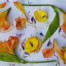 Botanical Collage 9 by Caren