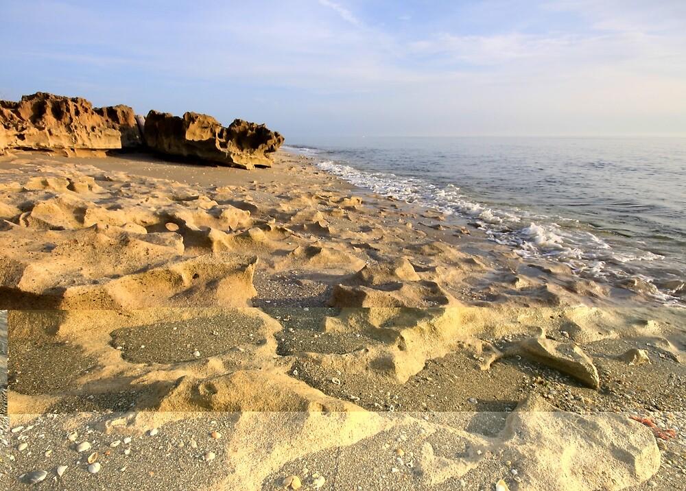 Pleistocene Anastasia Formation  by coralhead