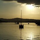 Sunrise On The Noosa River by mbutwell