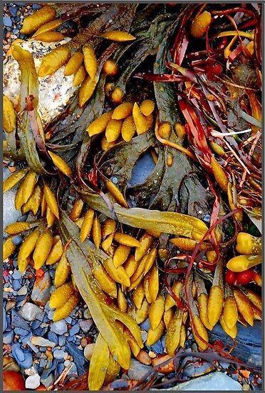Beach Still Life by Nancy Barrett