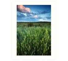 Blakeney Grass Art Print