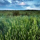 Blakeney Grass by Andy F