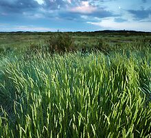 Blakeney Grass by Andy Freer