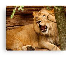 YAWNING LION Canvas Print