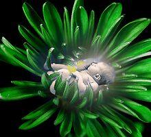 Flower embrace by Vanesa Bonilla