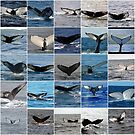 Known whales in the Gulf of Maine by yeimaya