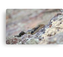 Hiding Water Dragon. Canvas Print