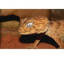 Centralian Prickly Knob-tailed Gecko. Photographic Print