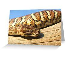 Centralian Carpet Python. Greeting Card