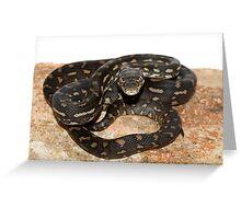 Hatchling Coastal Python. Greeting Card