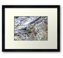 Water Dragon. Framed Print