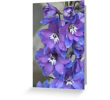 Two Toned Blue Larkspur In The Rain. Greeting Card