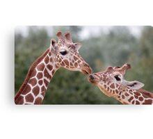 Pucker Up! (Giraffes) Canvas Print