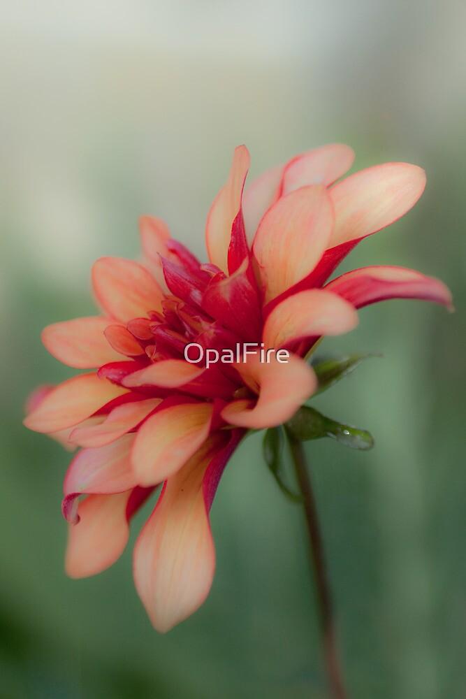 Dahlia by OpalFire