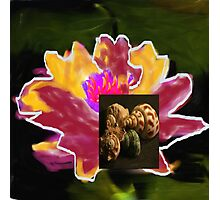 nassau lily Photographic Print