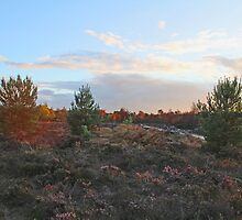 Off the track - Walking into Frensham woods - 5/8 by pathseeker