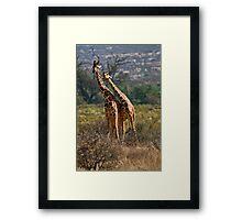 Necking-Giraffes in Samburu Framed Print