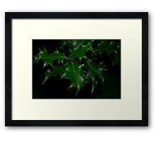 Holly Bush Framed Print