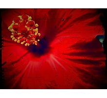 Scent Photographic Print