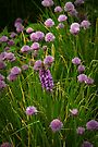 Orchid among chives by steppeland