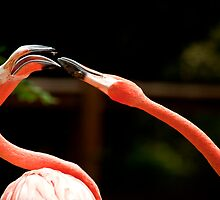 Two Flamingos Arguing About Something. by imagetj