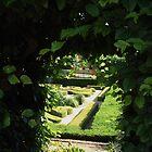Through the hedge by rualexa