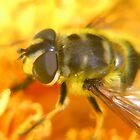 Honey Bee by Lizzylocket
