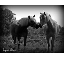 Sublime Equine Photographic Print