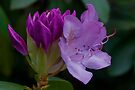 Azalea's Secrets by Gene Walls