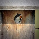 Baby Tree Swallow by Vickie Emms