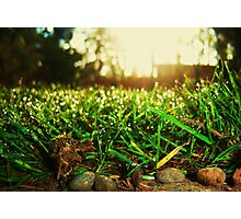 Grass Realm Photographic Print