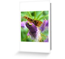 Comma Butterfly, Dorset UK Greeting Card