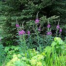 Fireweed by rocamiadesign