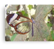 Glasswing Butterfly. Canvas Print