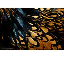 Fowl Feathered Photographic Print