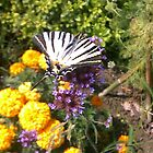 Butterfly on Flowers by Pontvert