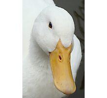 Quack! Photographic Print